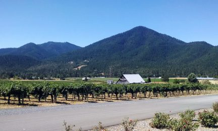 Valley View Vineyard from Applegate Road